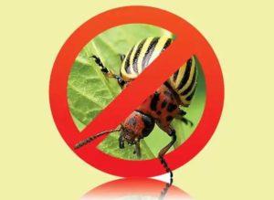 Внимание. Работает инсектицид