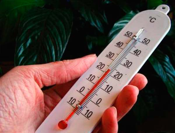 Температура воздуха для монстеры