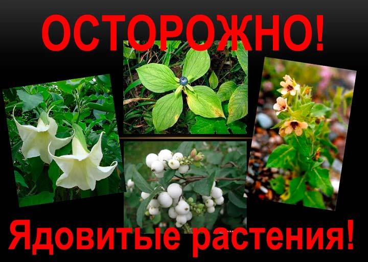 Опасности ядовитых растений