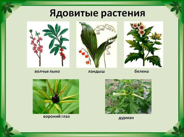 Разновидности ядовитых растений