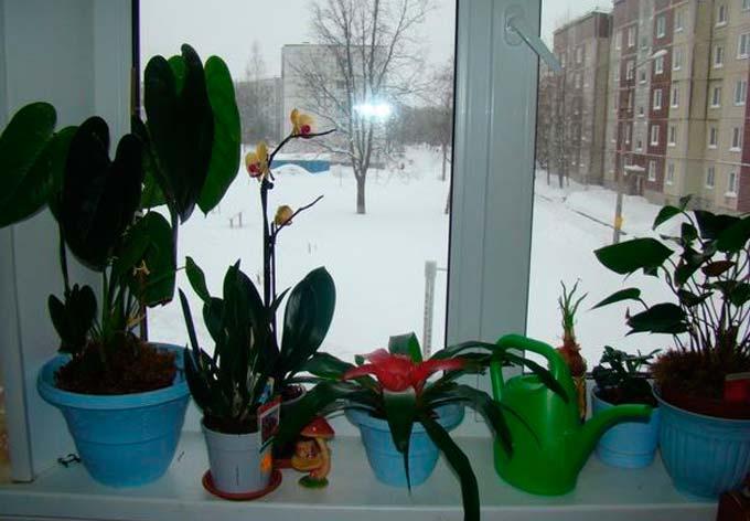 Зимой растения болеют чаще щитовкой