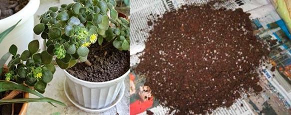 Почва для аихризона
