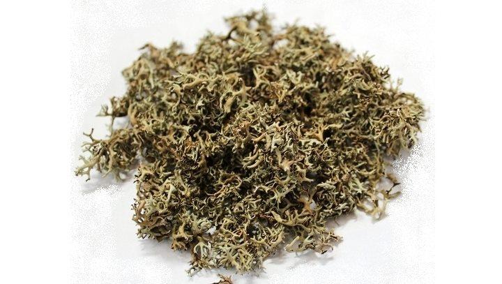 Сухая трава наперстянки