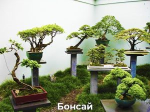 Бонсай деревья