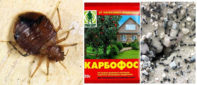 Клопы, муравьи и карбофос