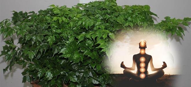 Радермахера и медитация