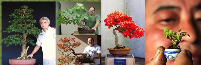Деревья бонсай разных рамеров