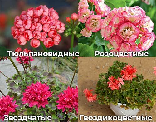 Тюльпановидные, розоцветные, Гвоздикоцветные, звездчатые