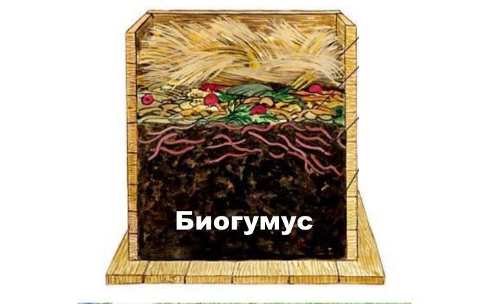 Биогумуса место в ящике с червями