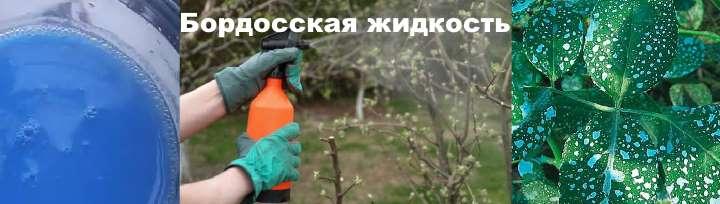 Использование бордосской смеси для мушмулы
