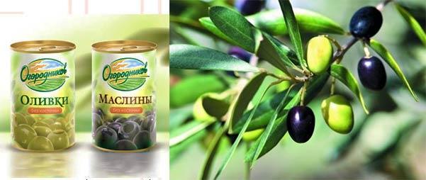 Оливки и маслины в консервах и на веточке