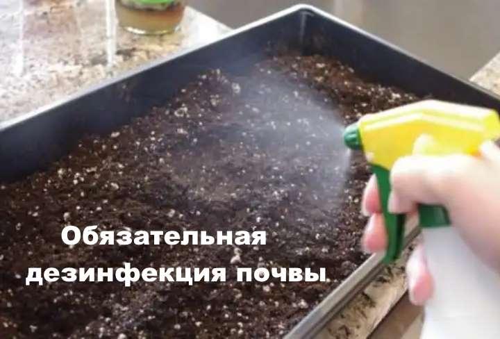 Почва под бактерицидным действием