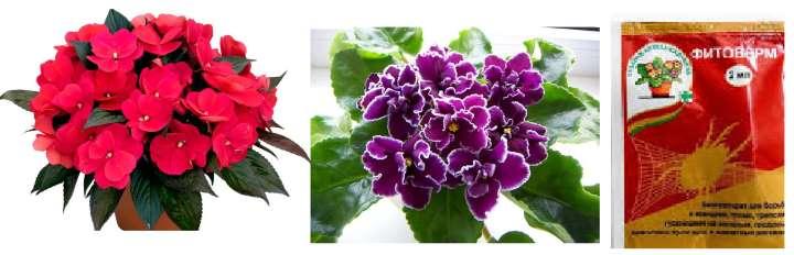 Цветы обрабатываем фитовермом