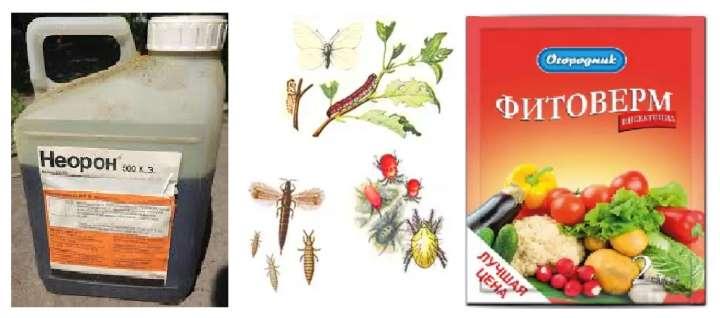Инсектициды для декабриста