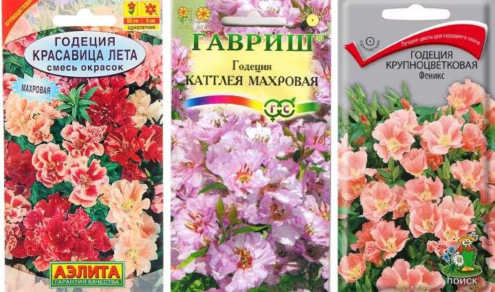 Пакетики семян годеции