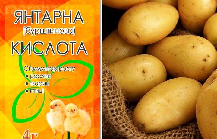 Картофель и янтарная кислота