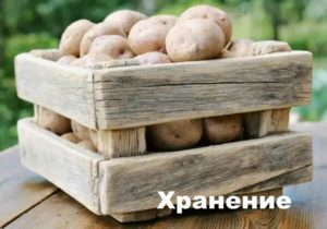 Размещение картофеля в ящике