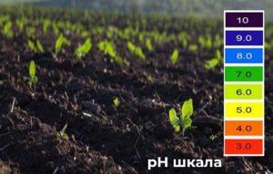 pH-шкала и почва