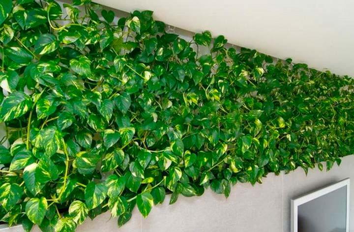 «Декоративно–лиственный» тип ампельных растений