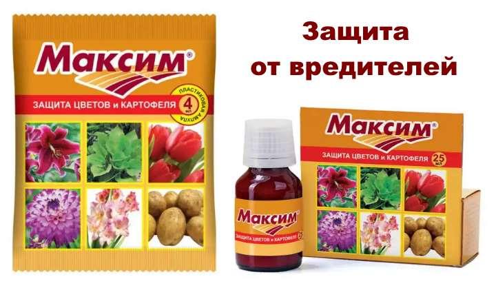 Препарат Максим для гардении