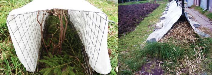 Метод сухого укрытия винограда
