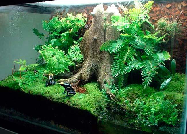 Наличие в палюдариуме искусственного мини-водоема