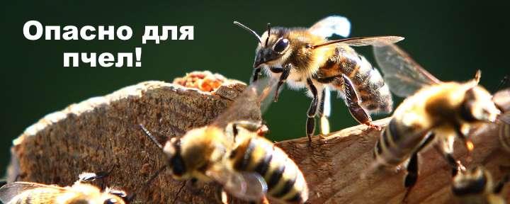 Пчелы умрут от фитоверма