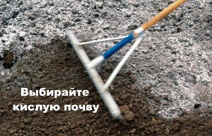 Грунт для рододендрона