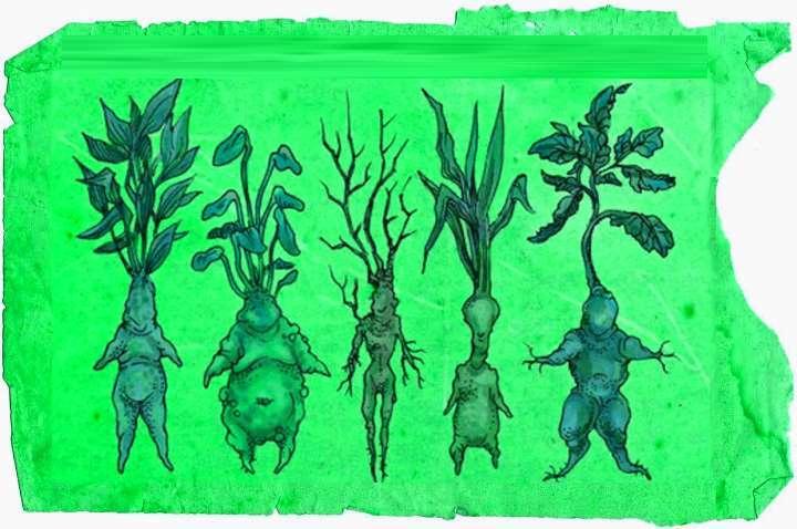 Фигурки из корней мандрагоры