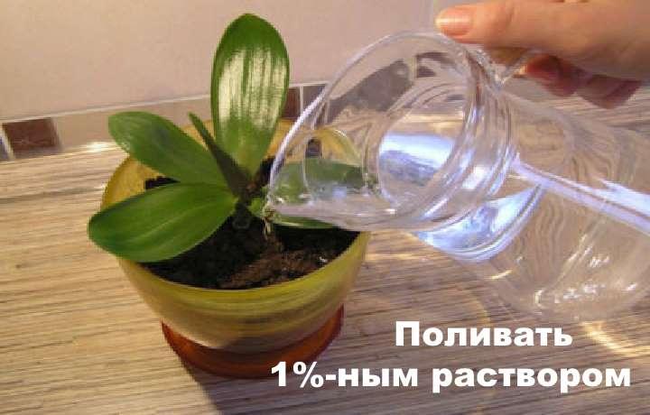 Кувшин с водой и янтарная кислота