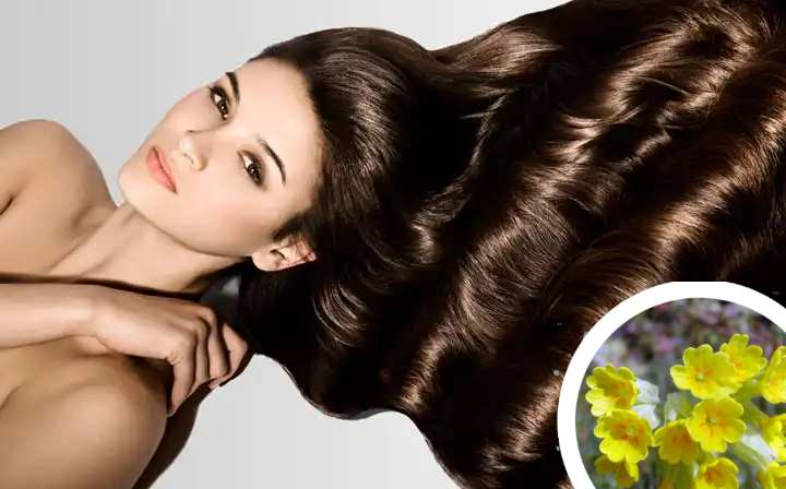 Для волос первоцвет весенний