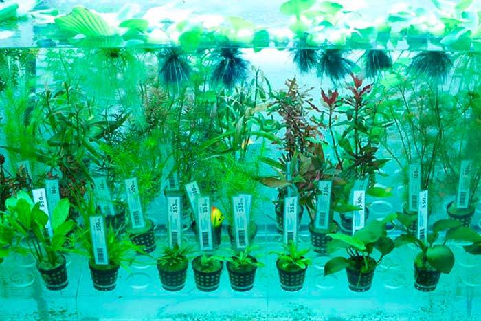 Разновидности растений для палюдариума