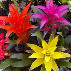 4 вида цветущего зигокактуса
