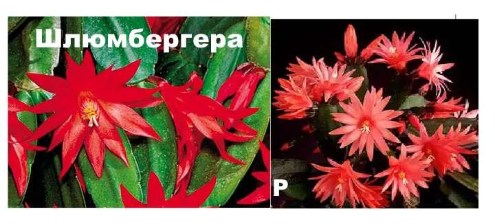 Сравнение растений