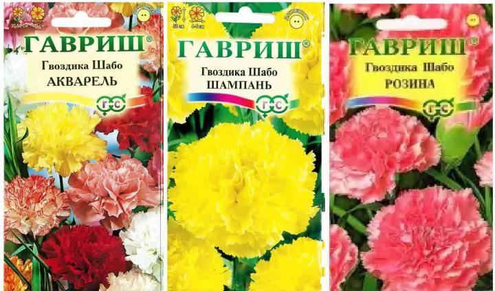 Пакеты семян гвоздики