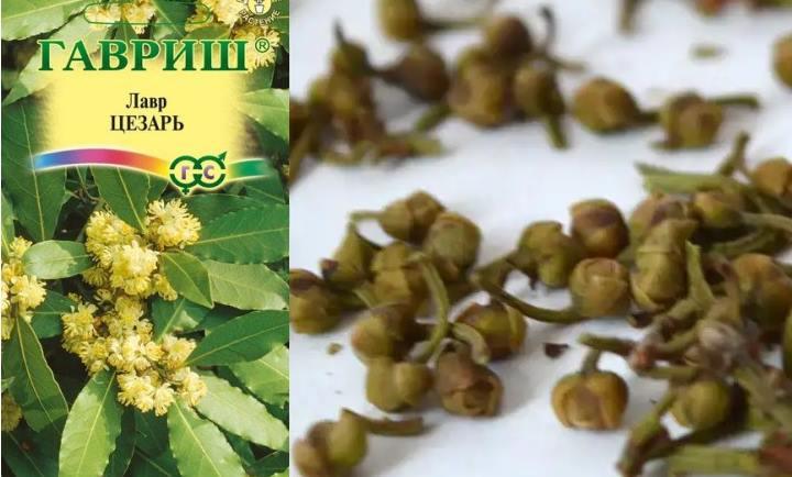 Пакет семян лаврового дерева