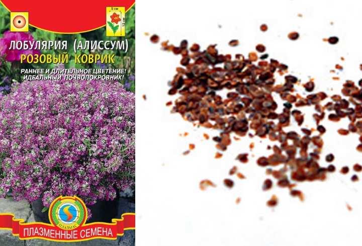 Пакет семян лобулярии