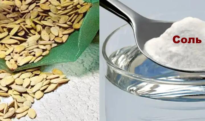 Замачивание в соли семян огурца