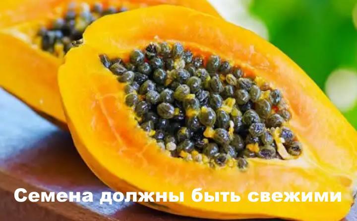 Семена дынного дерева