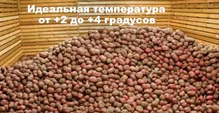Оптимум для картофеля