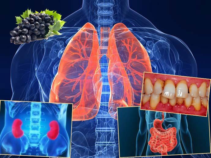 Кишмиш лечит болезни легких, ЖКТ, полости рта, почек