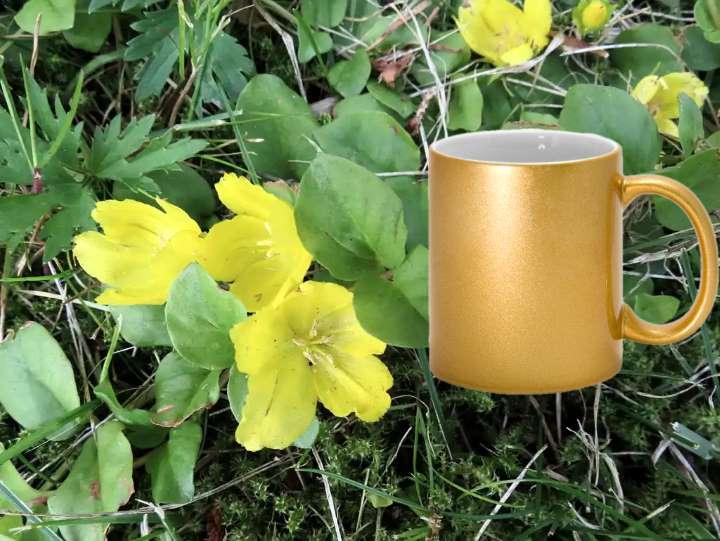 Чай из вербейника