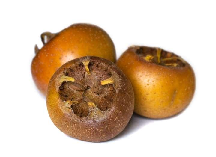 Плоды германской мушмулы