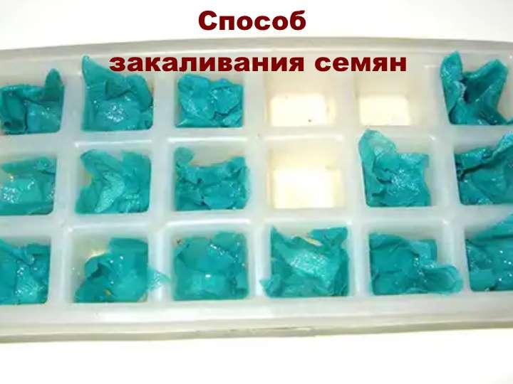 Семена в холодильнике