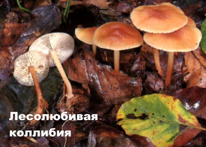 Осторожно! Несъедобные грибы