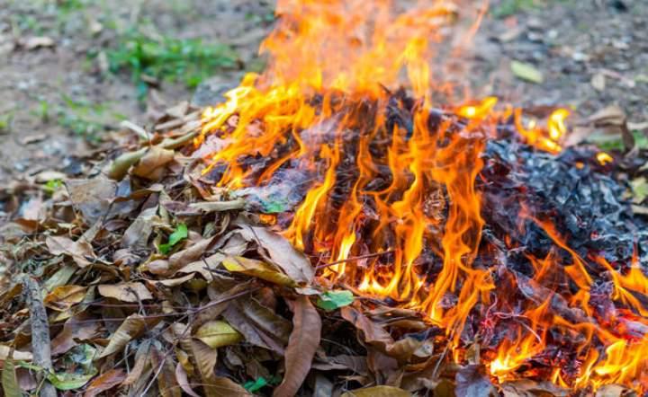 Сожгите личинки проволочника
