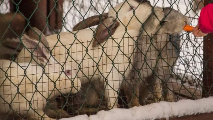 Вольер с кролями