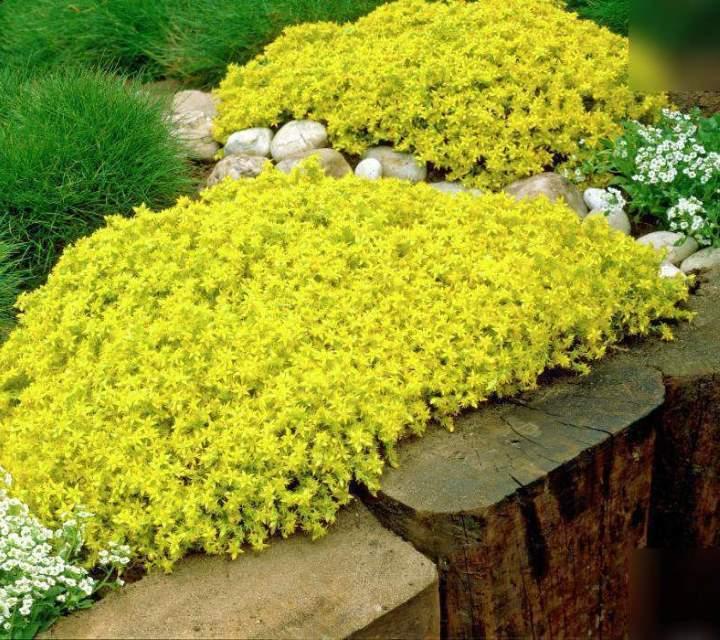 Цветы для ленивого цветника