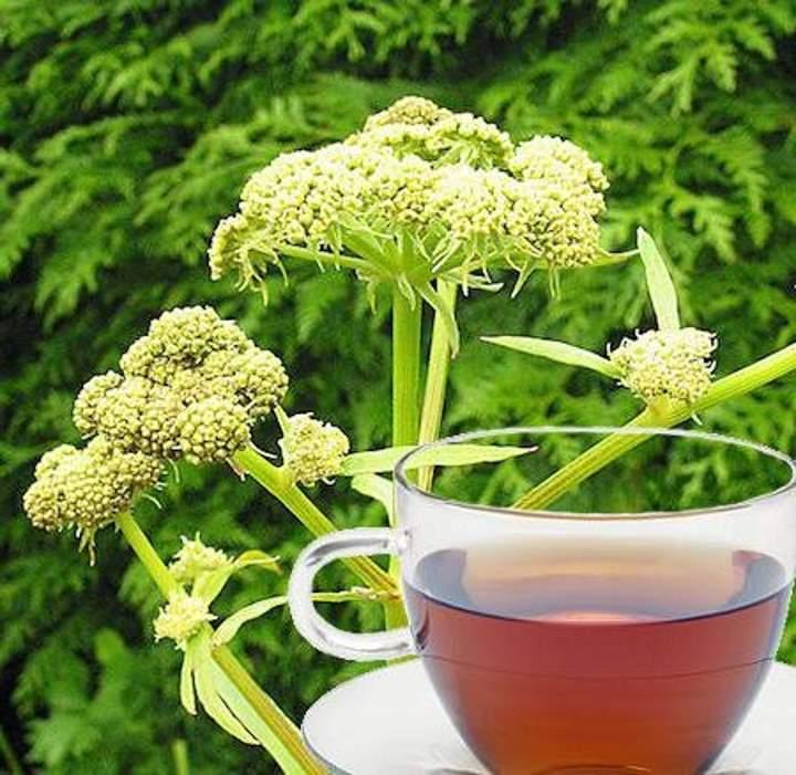 Чашка с чаем любистока
