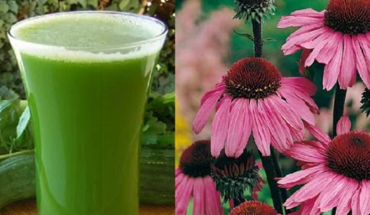 Травяной сок эхинацеи